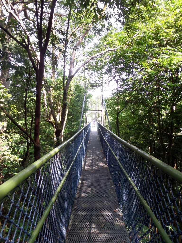 The MacRitchie Trail, Singapore