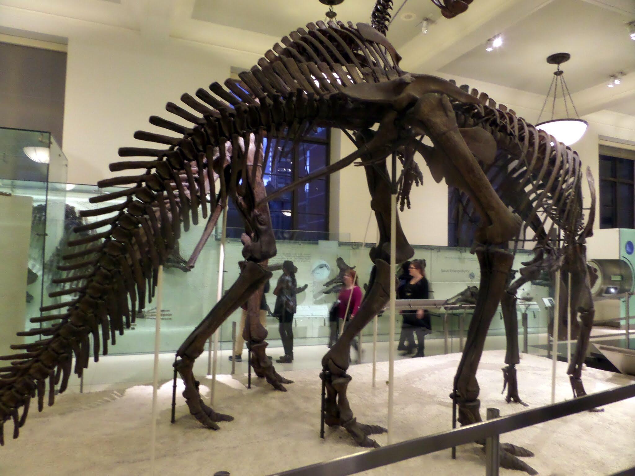 Dinosaur Gallery, American Museum of Natural History