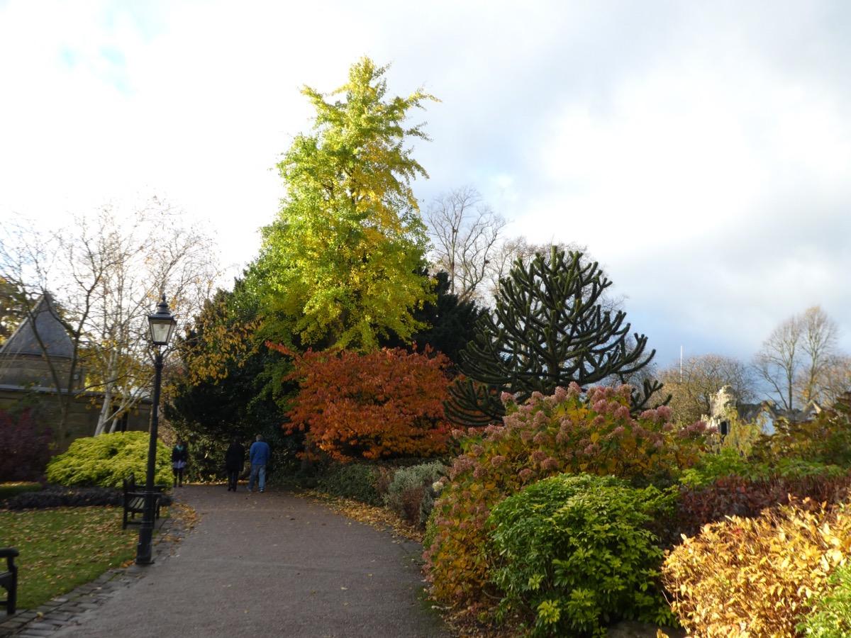 York foliage in autumn